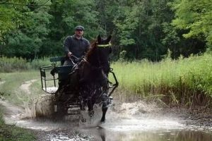 lovaskocsi-3